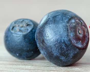 انواع توت - bilberry