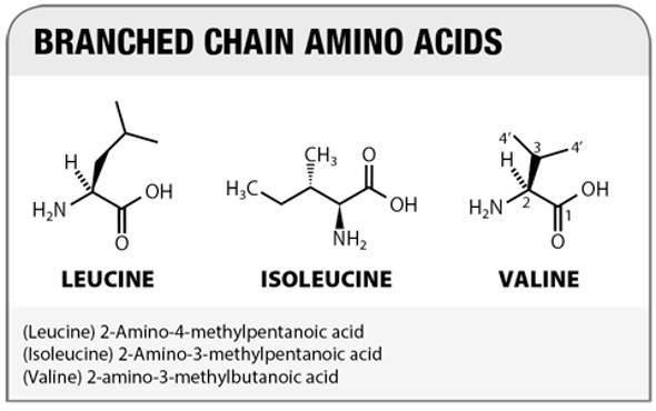 اسیدهای آمینه ضروری: تعریف ، فواید و منابع غذایی