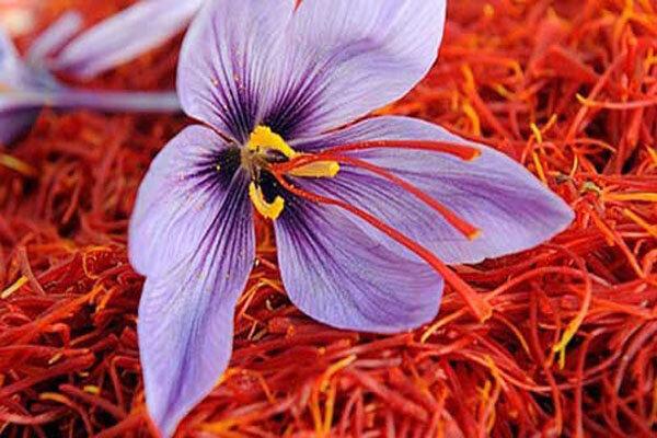 مهم ترین نکات برای خرید زعفران
