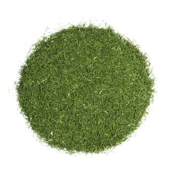 سبزی شوید